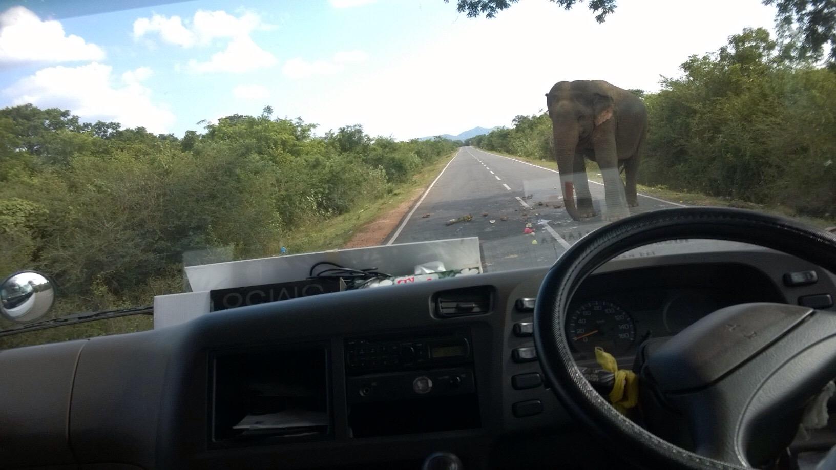 Elefant laver landevejs røveri på Sri Lanka, Yale nationalpark